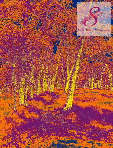 Country Path in a Dreamscape