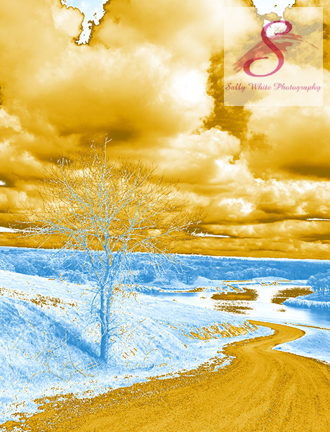 Lone Tree in Blue and Gold Landscape